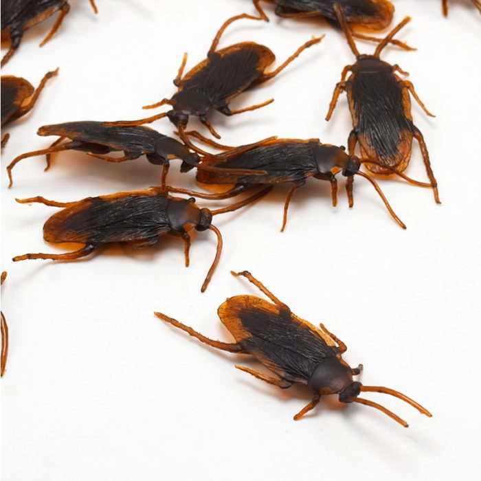 5PC Funny toy Fake Cockroach Novelty Roaches Bugs Realistic Insects toy Prank Simulation Tricky Disgusting Scary Spoof toy 1
